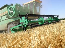 Threshing wheat in Ukraine.  It's still non-GMO by law to this day.